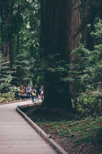 Muir Woods Forest