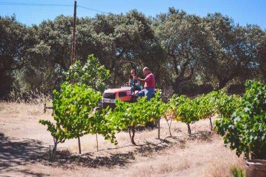 el campo - the country side of antonio